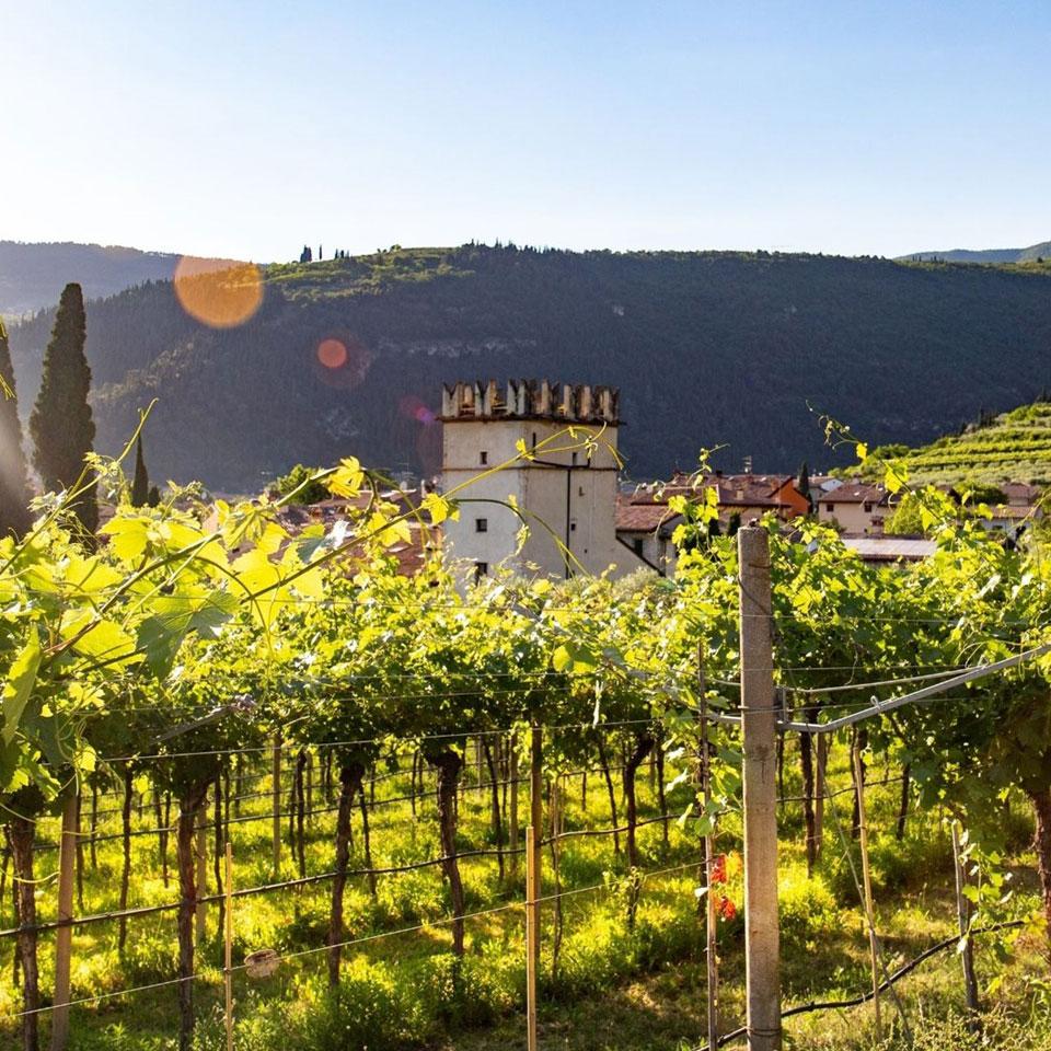 Vigneti Aperti e calendario 2021 del Movimento Turismo del Vino